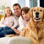 Comunicare  con i cani