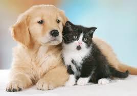 I Pet entrano in società