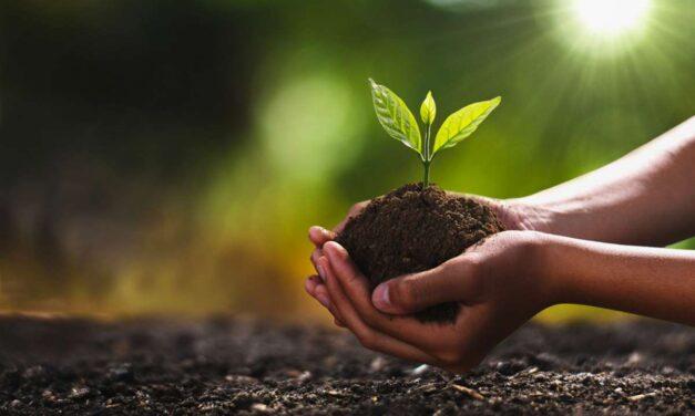 alberi per contrastare la crisi climatica