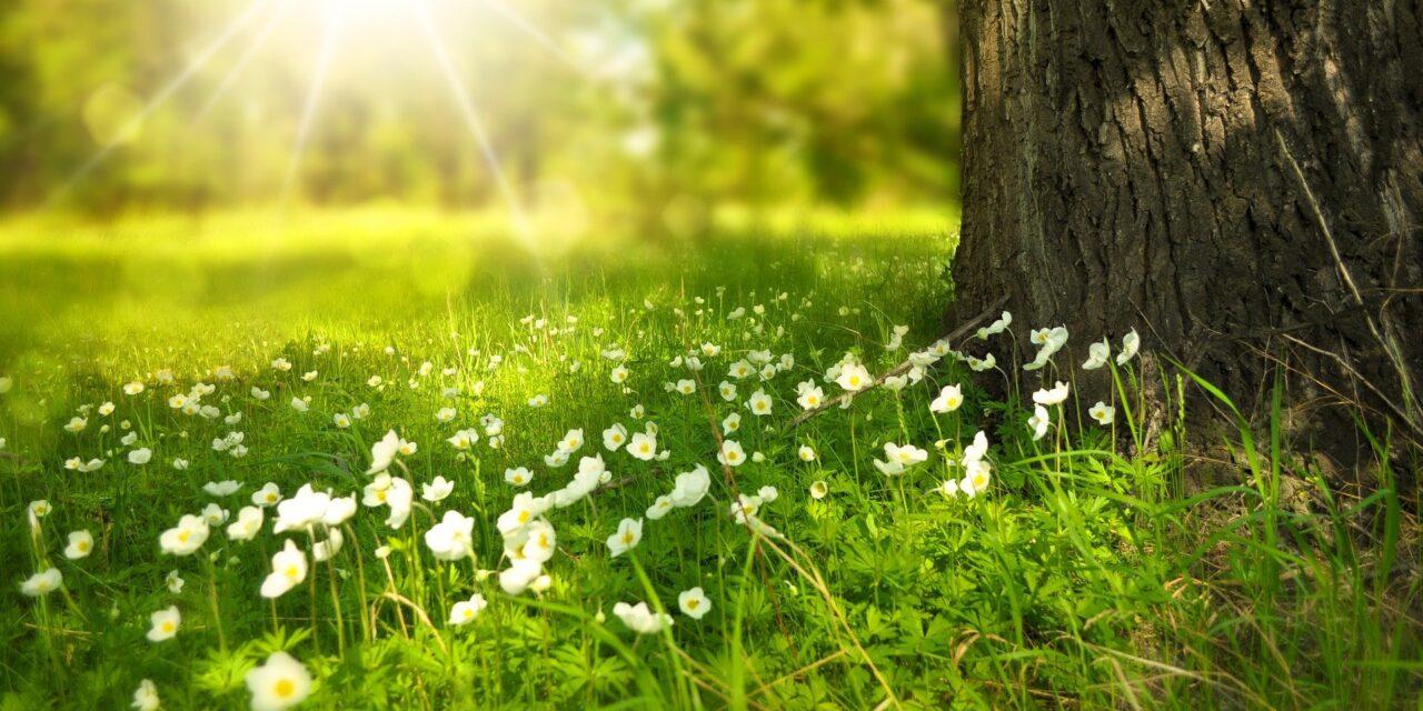 riforme a favore della crescita per garantire una ripresa più verde
